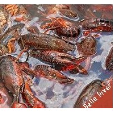 LIVE Crawfish Belle River w/ seasoning 30 lb Sack