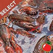Live Crawfish Select w/ seasoning 1 Sack