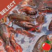Live Crawfish Select w/ seasoning 1 Sack