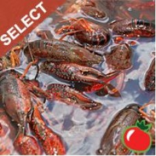 Live Crawfish Washed (SELECT) w/ seasoning