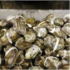 Louisiana Oysters (Whole) - Pasteurized