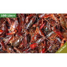 LIVE Crawfish 100 plus lbs Washed Field Run